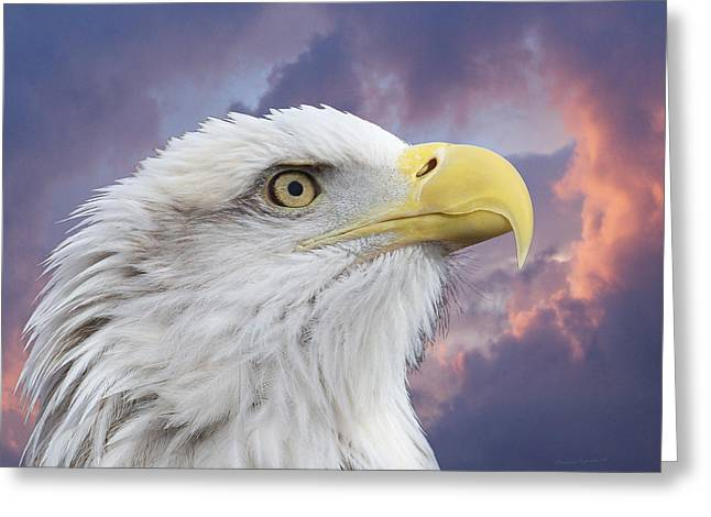 Eagle In Clouds Greeting Cards - Head in Clouds Greeting Card by Ernie Echols