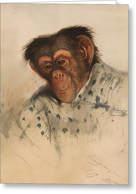 Chimpanzee Paintings Greeting Cards - Head Of A Chimpanzee Greeting Card by Edward Lear