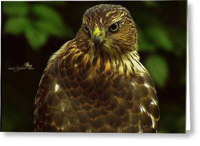Hunting Bird Greeting Cards - Head Spun Greeting Card by Rybird Music