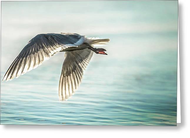 Flying Seagull Greeting Cards - Headless Flight Greeting Card by Caroline Vasica