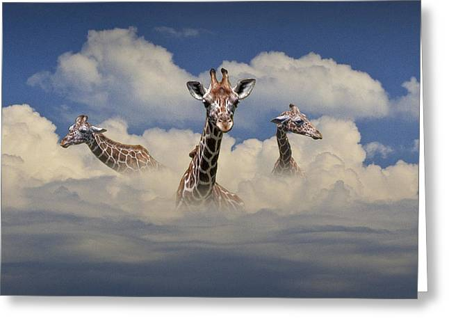 Randy Greeting Cards - Heads above the Clouds Greeting Card by Randall Nyhof