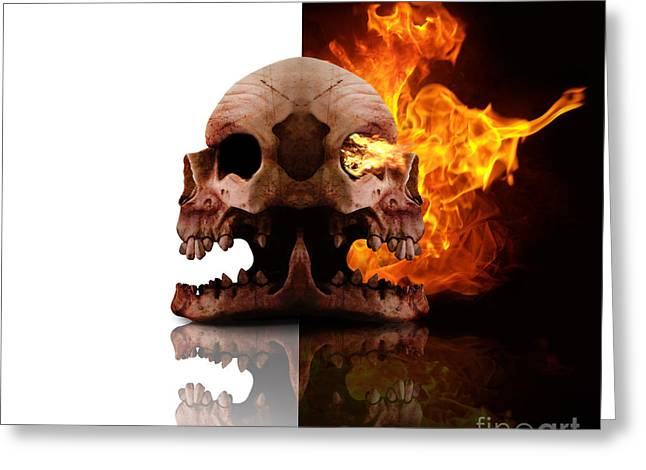 Heads Of Decay Greeting Card by Jorgo Photography - Wall Art Gallery