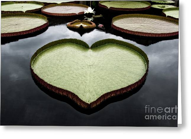 Lilly Pad Greeting Cards - Heart Shaped Lily Pad Greeting Card by Tom Gari Gallery-Three-Photography