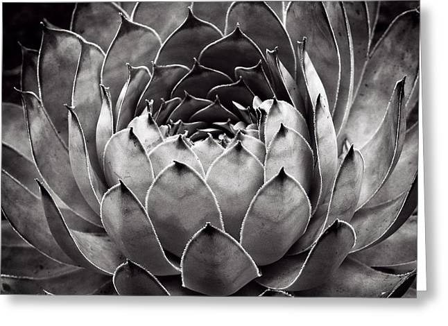 Cactus Flowers Greeting Cards - Heart Greeting Card by Tim Nichols