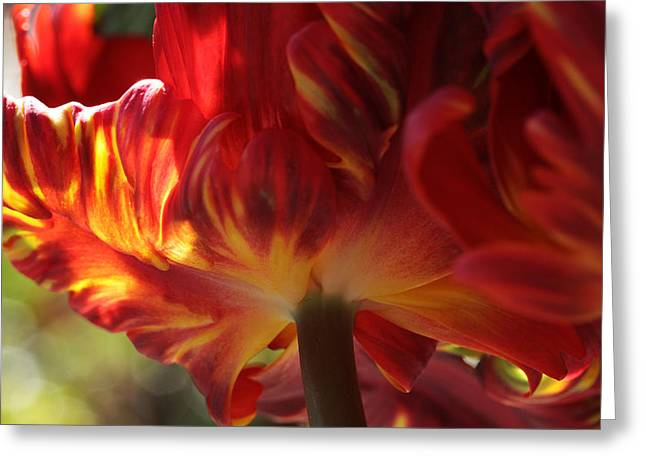 Spring Bulbs Greeting Cards - Heat Greeting Card by Connie Handscomb