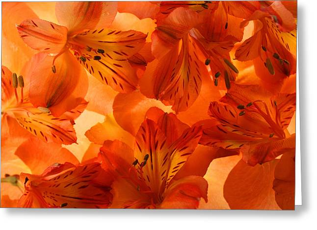 Peaches Photographs Greeting Cards - Heavenly Greeting Card by Bobby Villapando