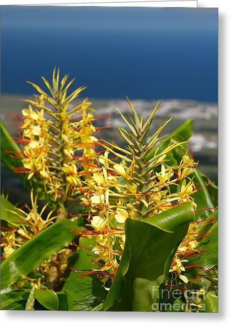 Hedychium Gardnerianum Greeting Card by Gaspar Avila