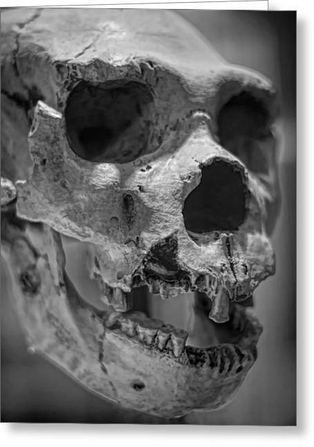Osteology Greeting Cards - Heidelbergensis Greeting Card by Heather Applegate