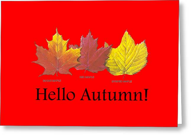 Fall Photos Drawings Greeting Cards - Hello Autumn Greeting Card by Jeff Folger
