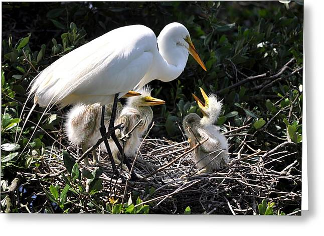 Baby Bird Greeting Cards - Hello Mother Greeting Card by Andrew Armstrong  -  Mad Lab Images