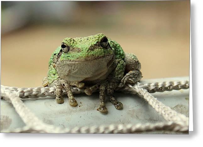 Hello Mr. Frog Greeting Card by Anita Hiltz