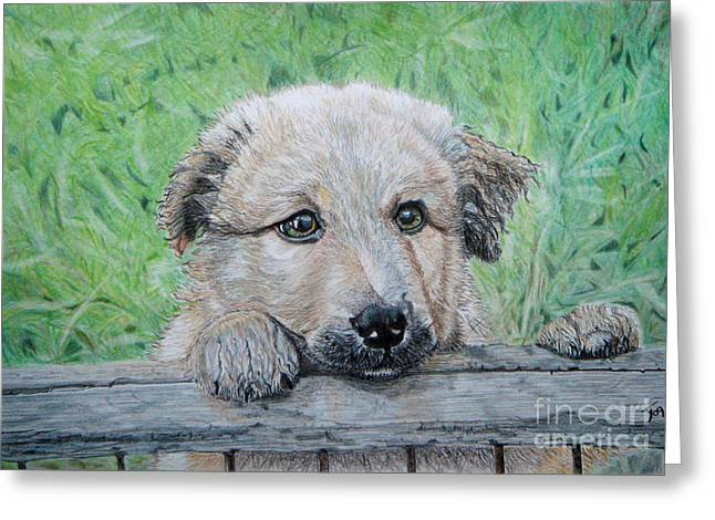 Garden Scene Drawings Greeting Cards - Hello Puppy Greeting Card by Yvonne Johnstone