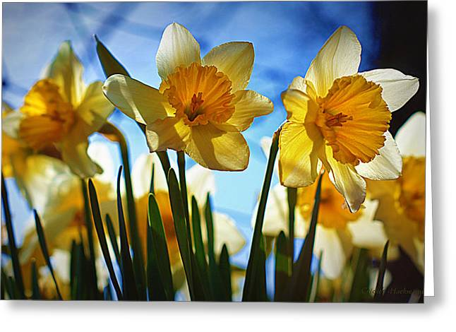 March Greeting Cards - Hello Spring Greeting Card by Cricket Hackmann