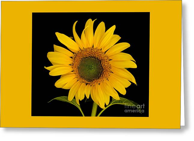 Black Top Greeting Cards - Hello Sunshine Greeting Card by Nick  Boren