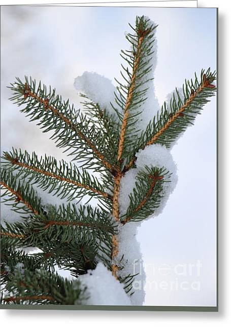 Wintry Greeting Cards - Hello There - Colorado Spruce Greeting Card by Jari Hawk