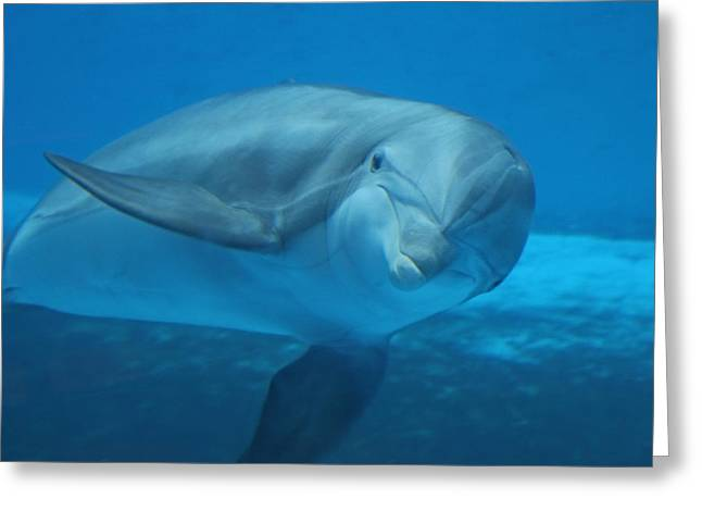 Aquatic Greeting Cards - Hello There Greeting Card by Diana L Elliott