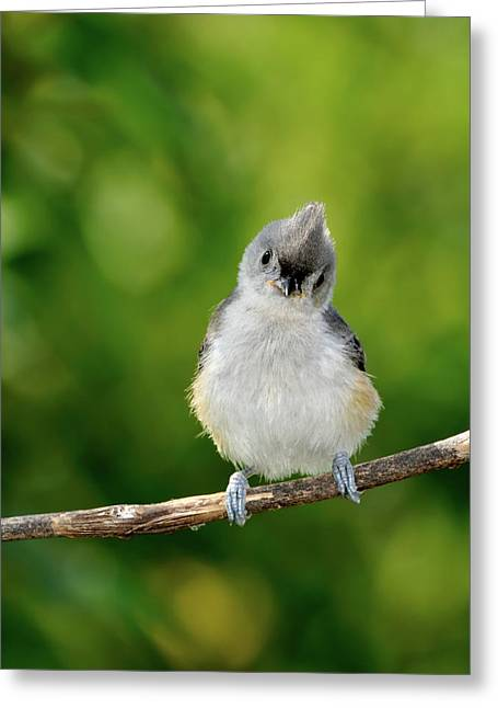 Baby Bird Greeting Cards - Hello World Greeting Card by Betty LaRue
