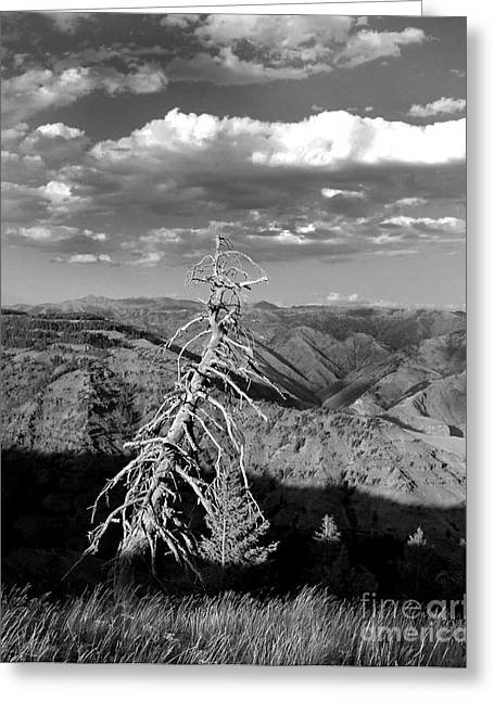 Black Berries Greeting Cards - Hells Canyon National Park Greeting Card by Diane E Berry