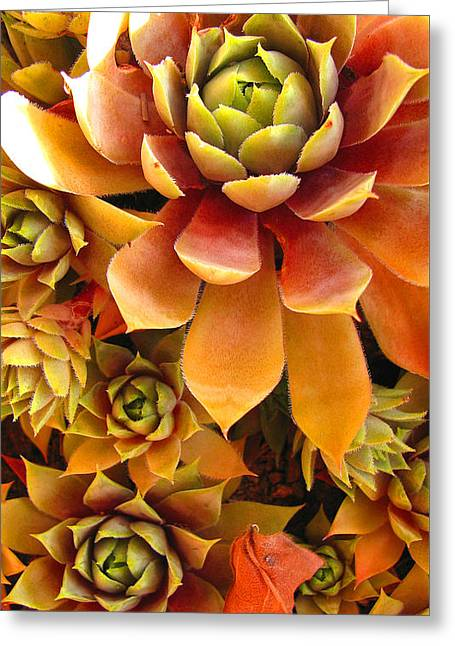 Recently Sold -  - Best Seller Greeting Cards - Hen and Chicks - perennial Greeting Card by Brooks Garten Hauschild