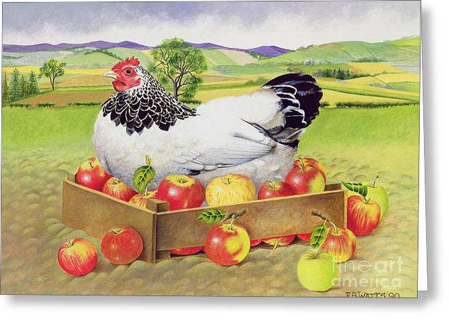 Profit Greeting Cards - Hen in a Box of Apples Greeting Card by EB Watts
