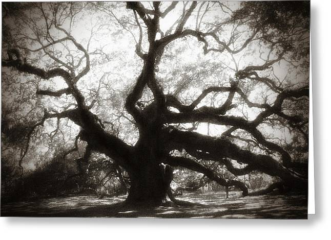 White Photographs Greeting Cards - Her Magesty Greeting Card by Amy Tyler