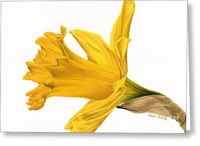 Herald Of Spring Greeting Card by Sarah Batalka
