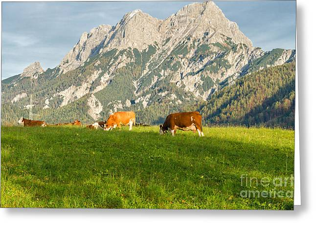 Swiss Photographs Greeting Cards - Herd of cows grazing in Alps Greeting Card by Kamlesh Sethy