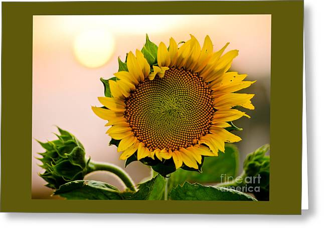 Here Comes The Sun Greeting Card by Nick  Boren