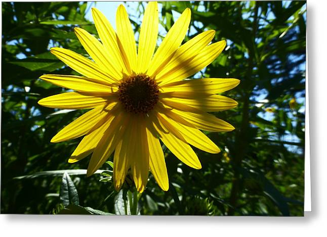 Indiana Flowers Greeting Cards - Here Comes The Sun Greeting Card by Tina M Wenger