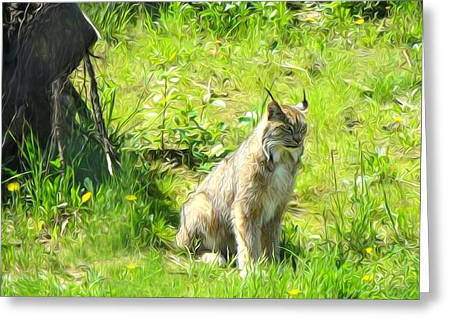Bobcats Greeting Cards - Here Kitty Kitty Greeting Card by Kathy Kelly