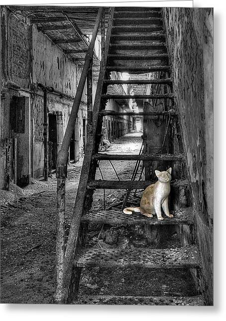 Penitentiary Greeting Cards - Here Kitty Kitty Kitty... Greeting Card by Evelina Kremsdorf