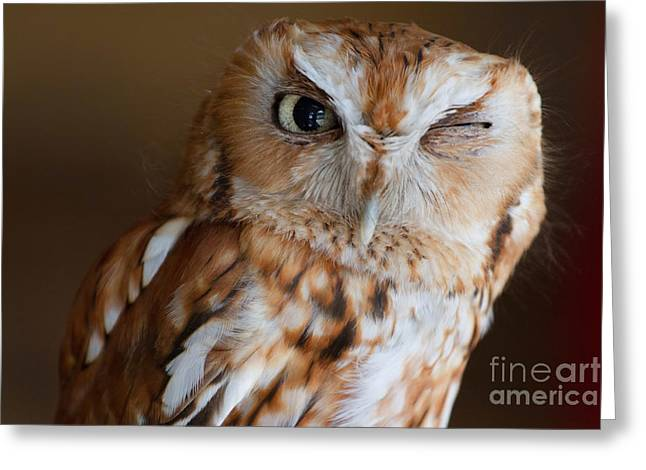 Here's Looking At You Greeting Card by A New Focus Photography