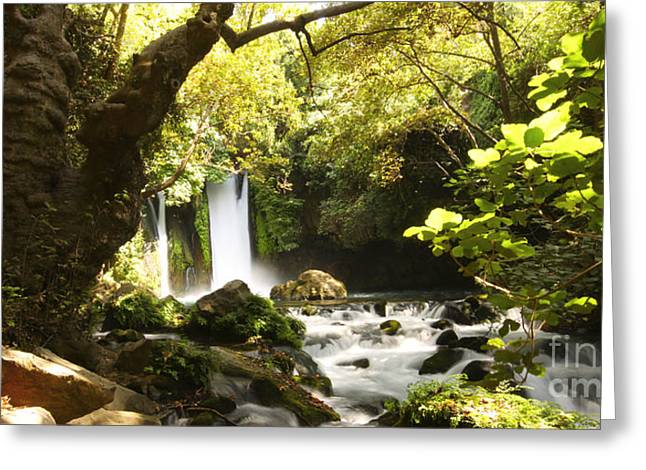 Height Greeting Cards - Hermon Stream Nature reserve Banias Greeting Card by Alon Meir
