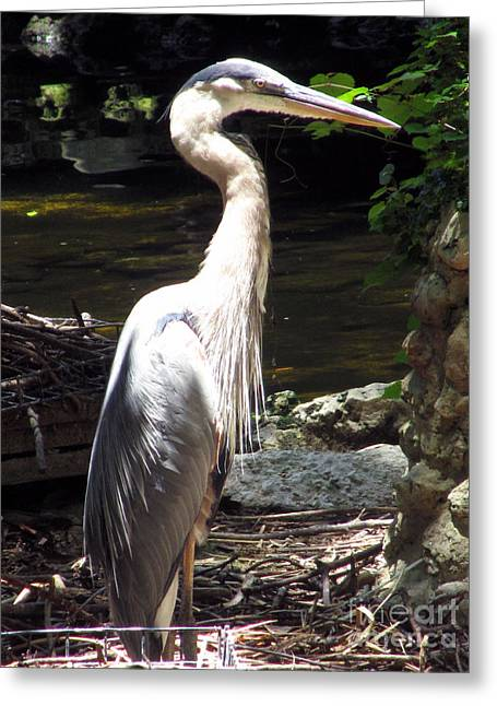 Angel Blues Greeting Cards - Heron Alert Greeting Card by Sharon Nelson-Bianco