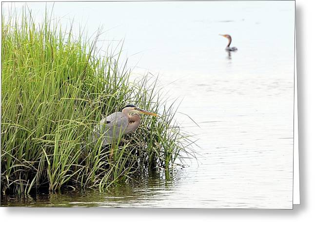 Al Powell Photography Usa Greeting Cards - Heron and Cormorant Greeting Card by Al Powell Photography USA