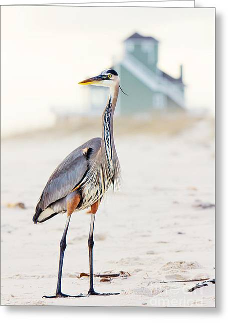 White Birds Greeting Cards - Heron and the Beach House Greeting Card by Joan McCool