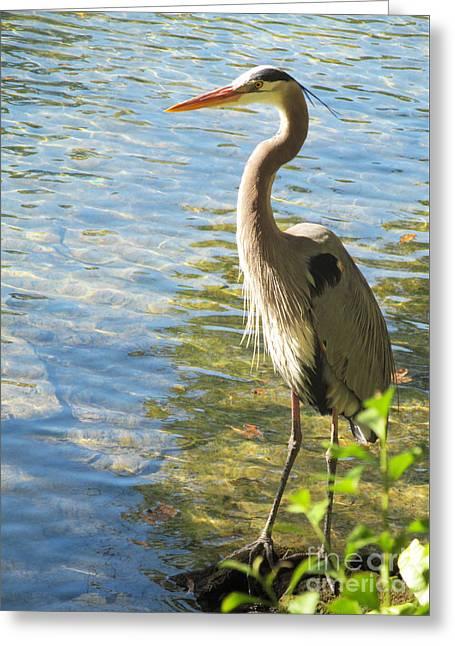 Angel Blues Greeting Cards - Heron Habitat Greeting Card by Sharon Nelson-Bianco