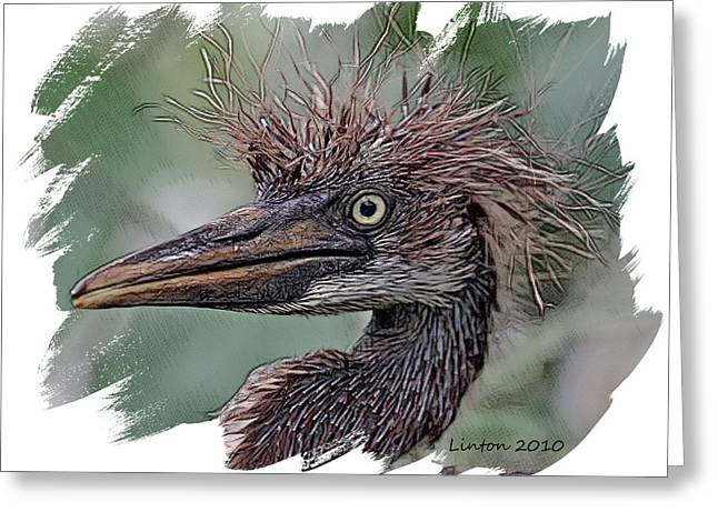 Tri Colored Greeting Cards - Heron Nestling Greeting Card by Larry Linton