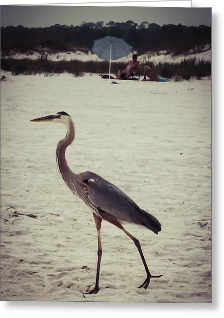 Blue Green Wave Greeting Cards - Heron On Beach Greeting Card by Debra Forand