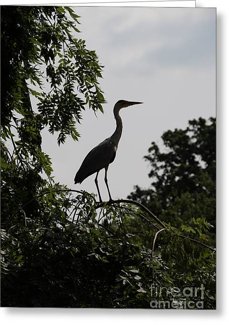 Hunting Bird Greeting Cards - Heron on the look out Greeting Card by F Helm