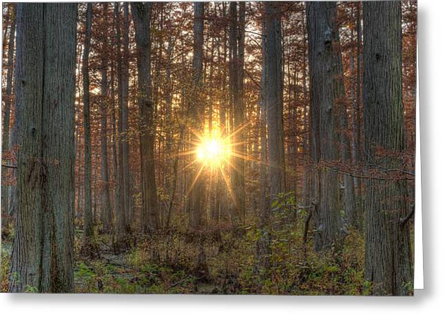 Heron Pond Sunrise Greeting Card by Steve Gadomski