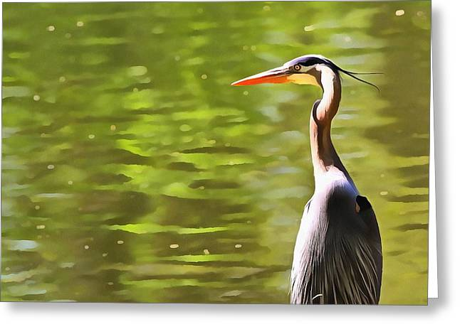 Great Birds Mixed Media Greeting Cards - Heron Wading And Waiting Greeting Card by Dan Sproul