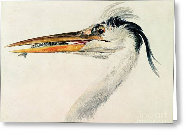 Caught Greeting Cards - Heron with a Fish Greeting Card by Joseph Mallord William Turner