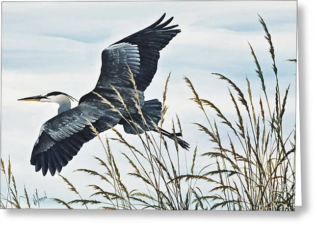 Heron Greeting Card Greeting Cards - Herons Flight Greeting Card by James Williamson