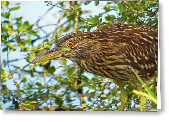 Herring Run Heron Greeting Card by CapeScapes Fine Art Photography