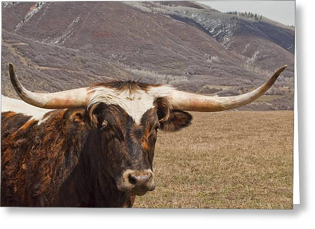 Hey There Cowboy Greeting Card by Daniel Hebard