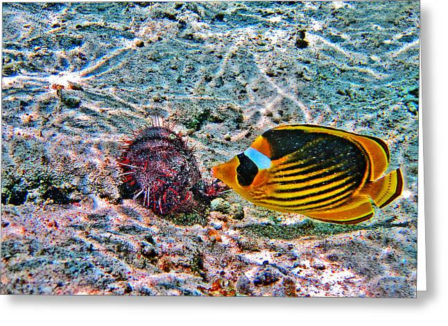 Mccoy Greeting Cards - Hey. Underwater World. Greeting Card by Andy Za