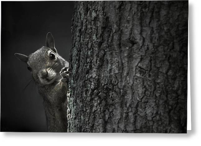 Gray Hair Greeting Cards - Hi Squirrel Greeting Card by Debra Forand