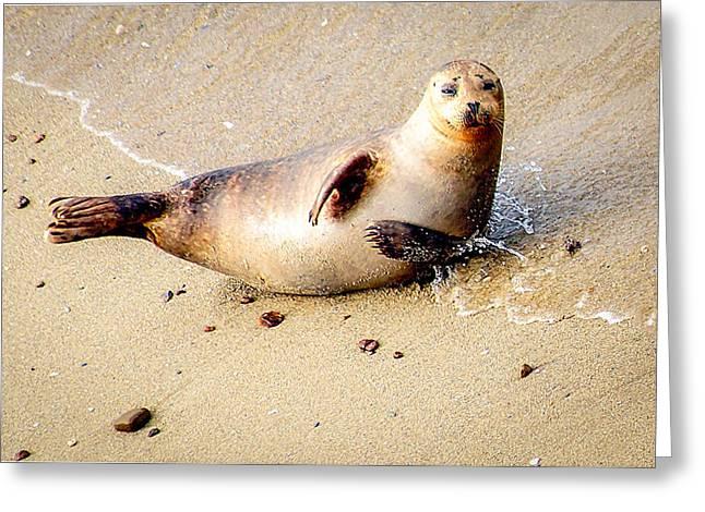 Ocean Mammals Greeting Cards - Hi There Greeting Card by Evan Jones
