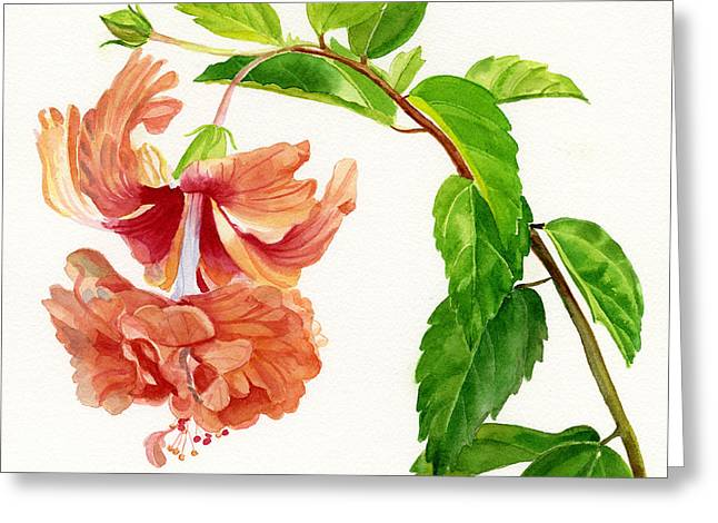 Lacy Greeting Cards - Hibiscus El Capitolio Square Design Greeting Card by Sharon Freeman
